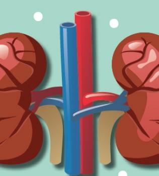 ¿Cómo cuido mis riñones?