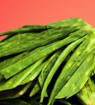 El nopal, ¿el ideal para mi dieta diaria?
